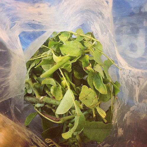 Quita Maldicion / Jinx Removing Herb (Fresh)