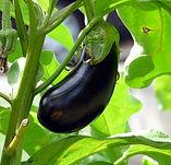 vegetable-2584412_960_720.jpg