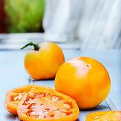 golden-jubilee-tomato.jpg
