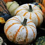 thanksgiving-1733135_960_720.jpg