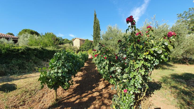 Le mas du Cyprès vu de ses vignes