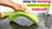 How to preserve fresh green plantain.png