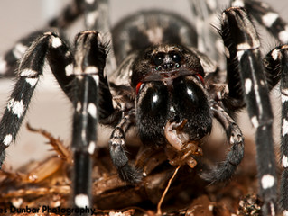 Island of the Wolf Spider