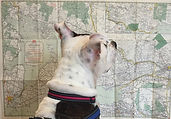 Dog reading a map