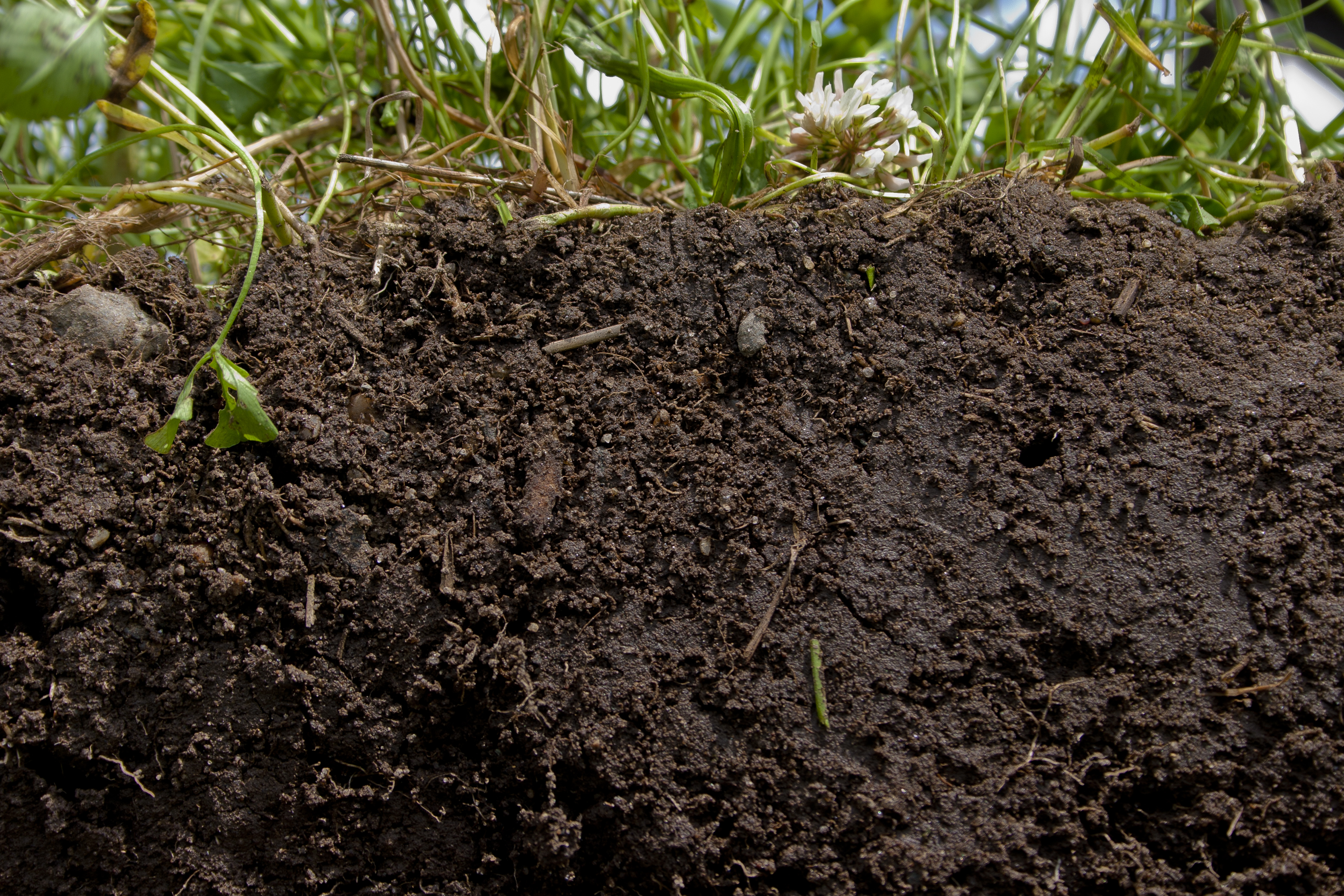 The Results of Good Soil Health