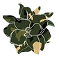 Camo magnoliaa-05.png