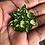 Thumbnail: Magnolia Enamel Lapel Pin