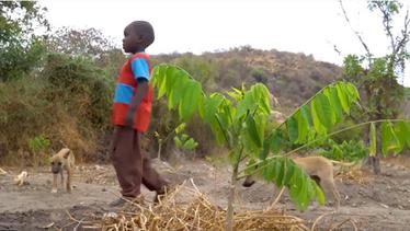 Greening Africa - seeing change (episode 4)