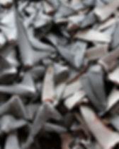 sharkfins.jpg
