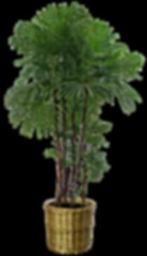 artshare_ru-plants-1.png
