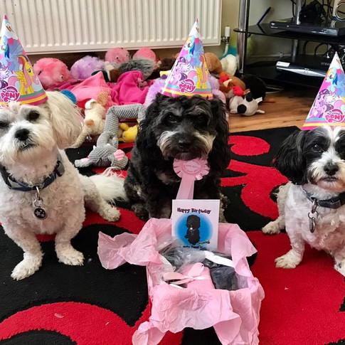 Bailey, Dolly & Jessie