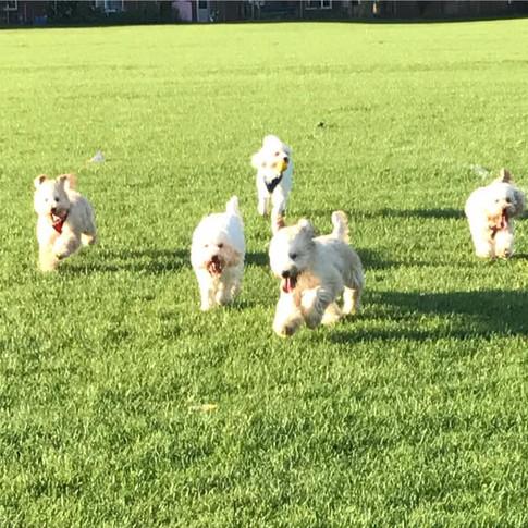 Gypsy, Romi, Cookie, Little Bob & Herbie