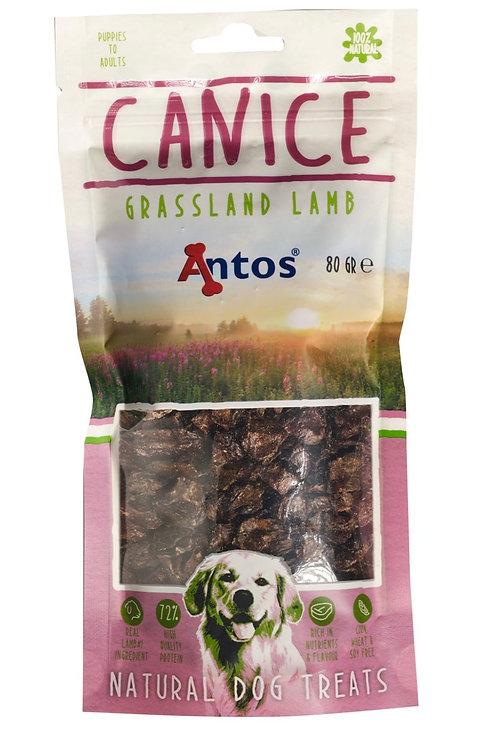 Canice 100% Pure Lamb 80gm