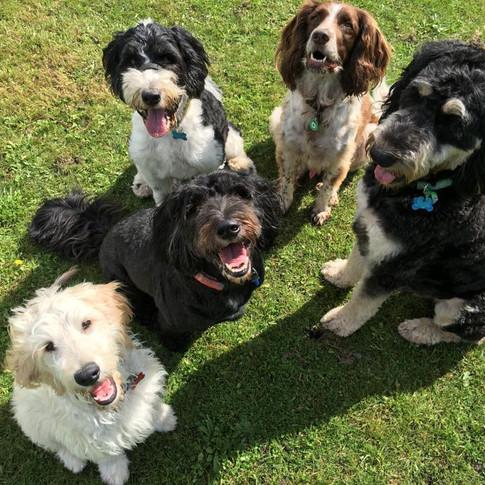 Sullivan, Balou, Koda, Barney & Parker