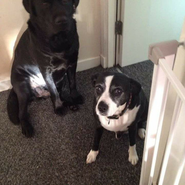 Monty & Jasper