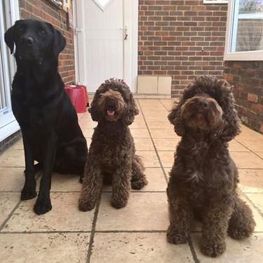 Jackson, Ralph & Humphrey