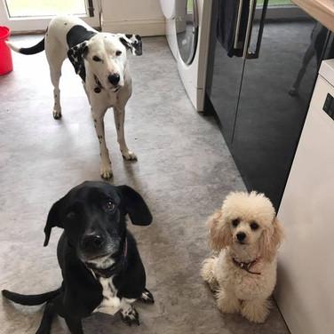 Duke, Daisy & Luna