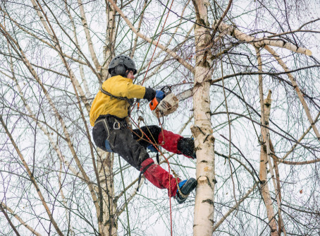 Benefits to Removing Trees in the Winter