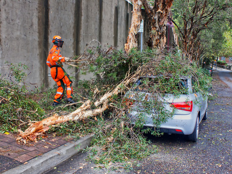 What Constitutes an Emergency for Tree Services