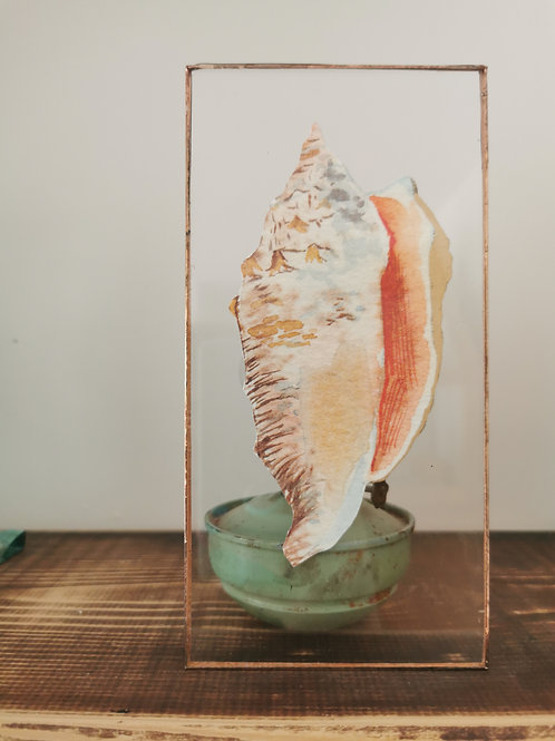 Encased Conch Shell