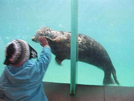Oban Sea Life Sanctuary
