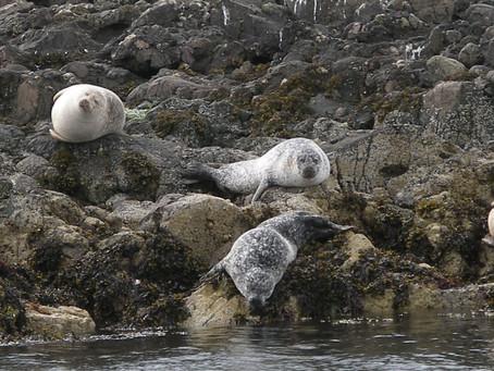 Oban Sealife Adventures