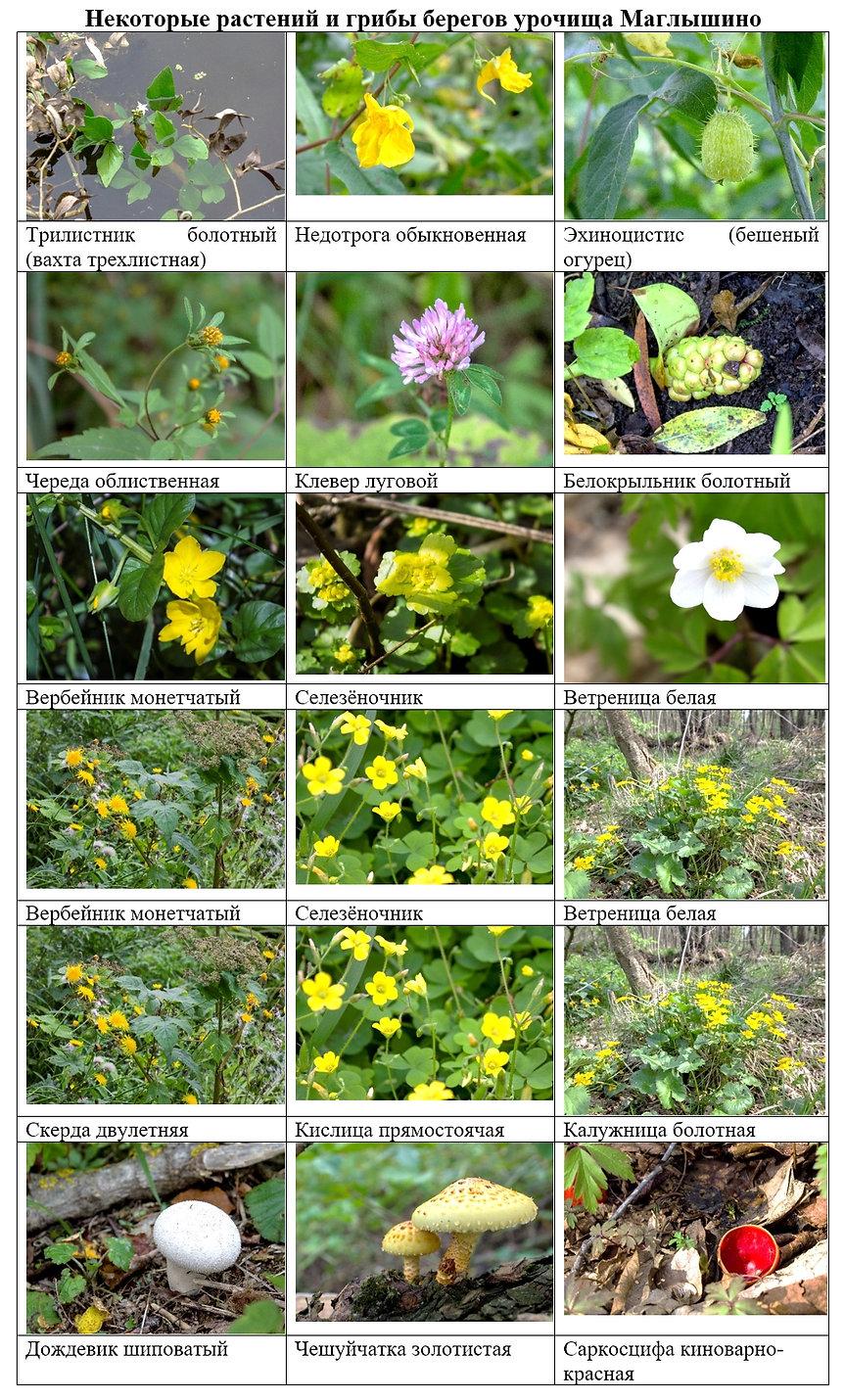 Приложение 2 Маглышино растения.jpg