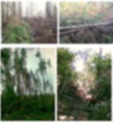 Приложение 2 1.jpg