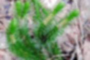 баранец фото.jpg