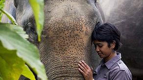 farwiza-farhan-elefante.jpg