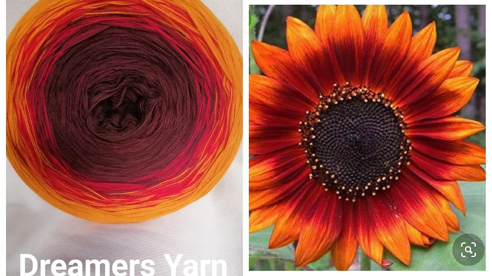 Maroon sunflower