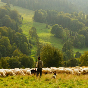 Just a shepherd – Obeying your calling