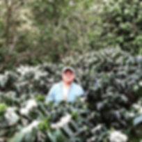 Finca Los Plantes, Sergio Ticas, Finca en Chalatenango, Cafe de Chalate, Best Coffees in El Salvador