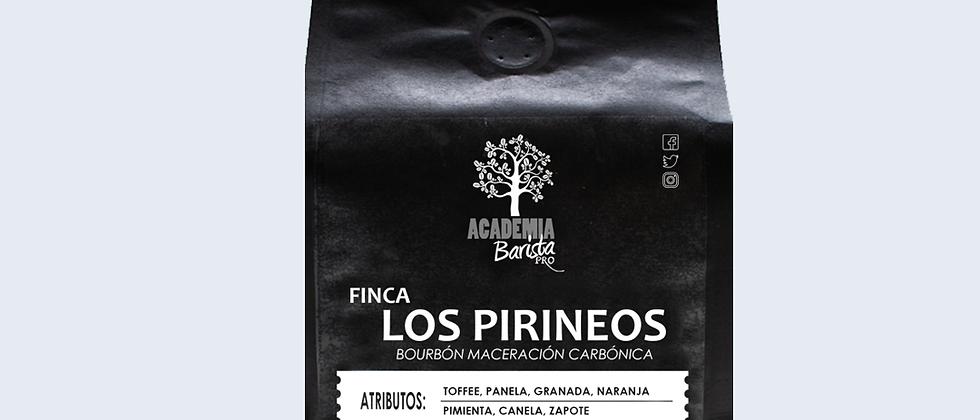 Finca Los Pirineos Bourbon Maceración Carbónica - 12oz