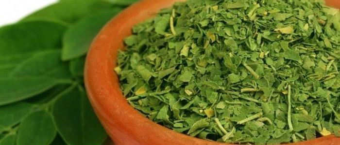 Tisane Herbal de Moringa de la India Puro 2oz