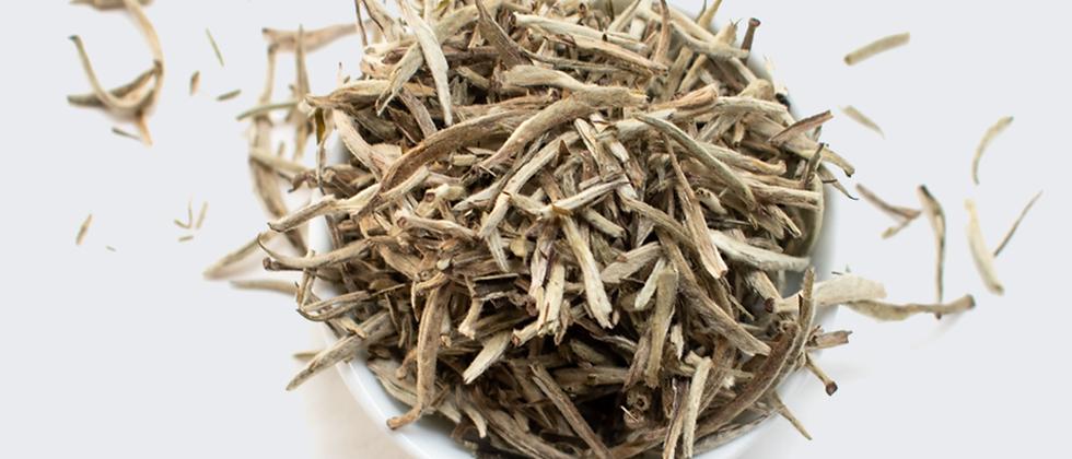Té Blanco | Silverback Silver Needle White Tea - 1oz