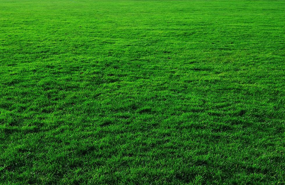 grass-background.jpg