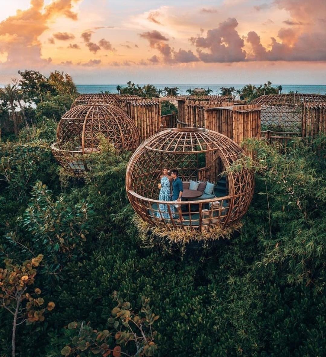 Maldiven tree pod