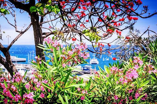 Madeira bloemeneiland.jpg