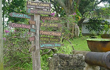 Cocoa-plantation-in-St-Lucia-www.extraor