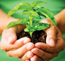 Herbs-for-Healing