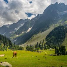 5 Lakes Luxury Wellness Trek, Kashmir