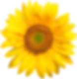 sunflower.jpg