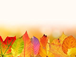 Осень в Speech-art!