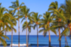 Hawaiian Palms.jpg