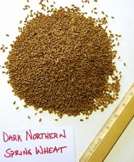 Dark Northern Spring Wheat