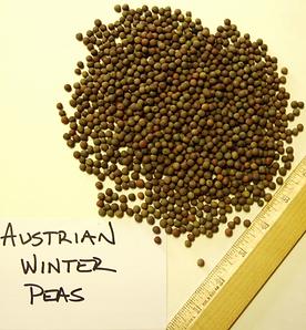 Austrian Winter Peas