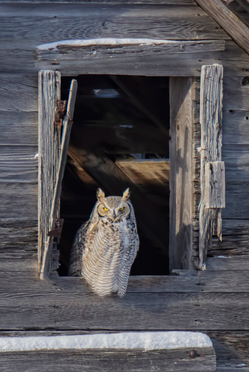 SK_2018_12_31 Owls 156dncr.jpg