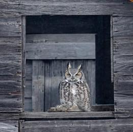 SK_2019_11_10 Owls 800 1027dncr copy 2.j