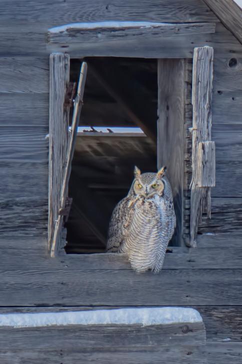 SK_2018_12_31 Owls 281dncr.jpg